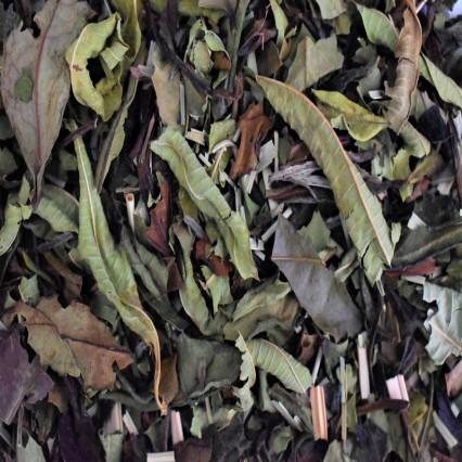 Λευκό τσάι για αδυνάτισμα